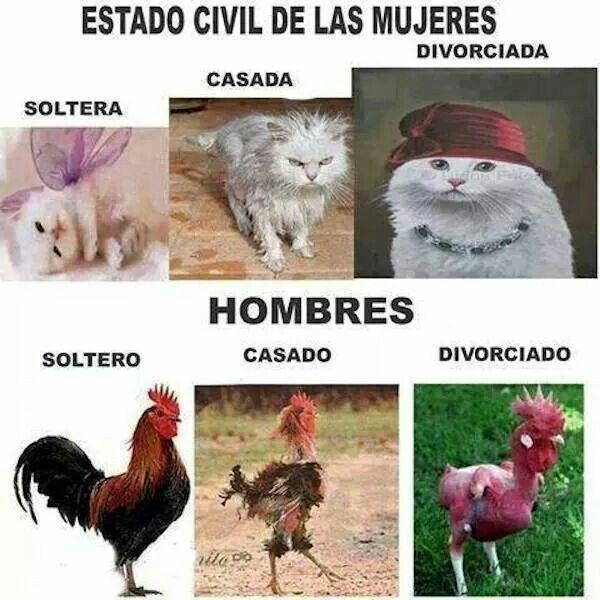 Memes De Chicas Solteras Casadas Y Divorciadas Mujer Se Ofrece Jaén-9396