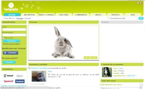 Sitio De Conocer Para Perros Escort La Gomera-41155